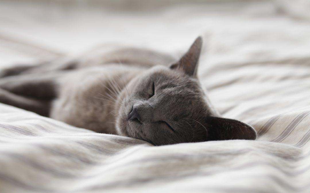 Katzenschnupfen: Erkennen und richtig behandeln!