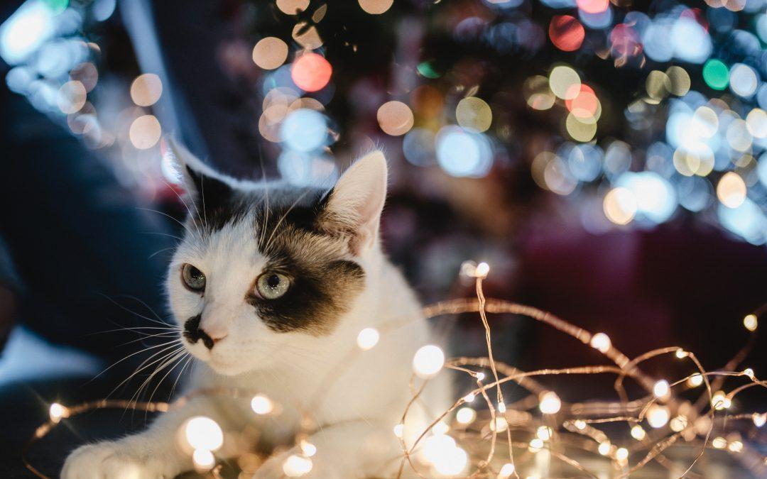 Weihnachten mit Haustieren