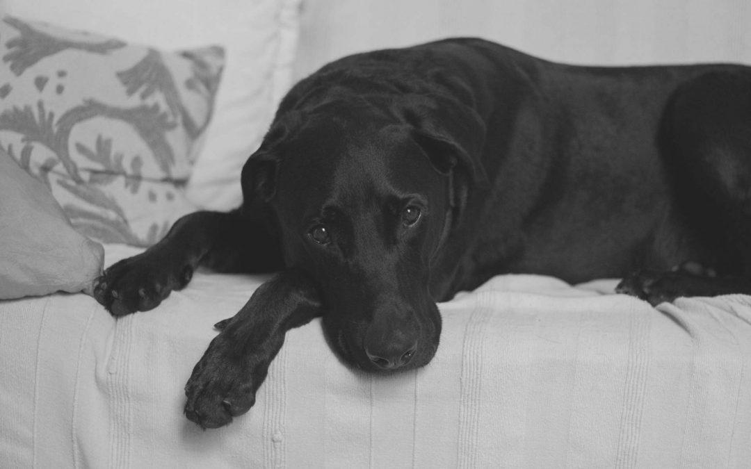 Typische Krankheiten bei Hund und Katze erkennen