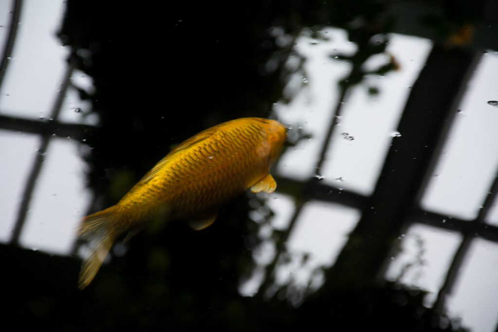 petcare - Fische im Teich überwintern