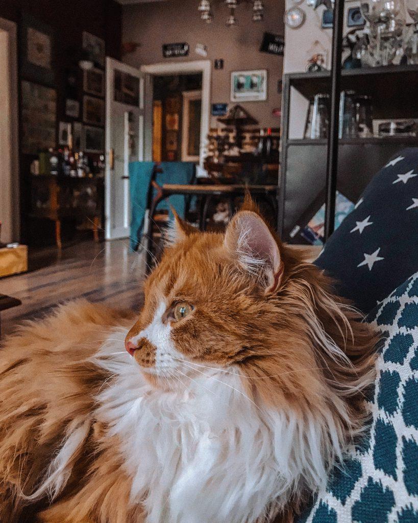 petcare - Katzen im Winter