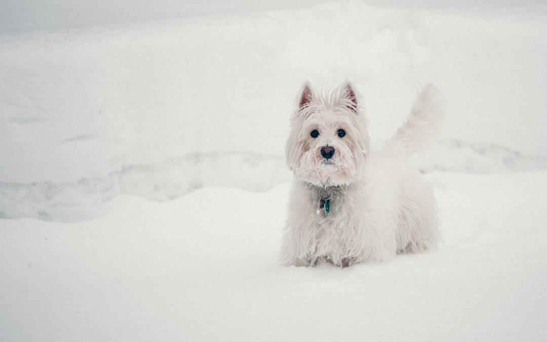 Haustiere im Winter - petcare