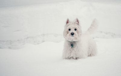 Einfach durch den Winter – Tipps für Dein Haustier