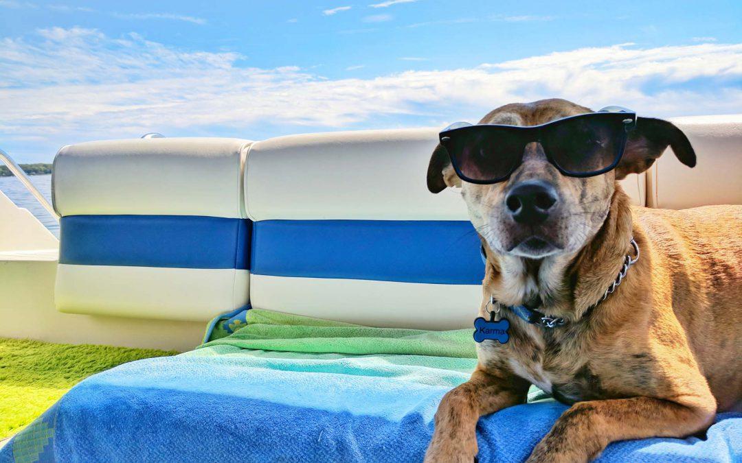 Ferienvorbereitung für Dein Haustier