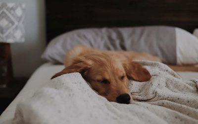 Ernsthafte Erkrankungen bei Haustieren – Teil 1