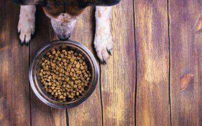 Getreidefreie Ernährung beim Hund: Zukunft oder Mythos?